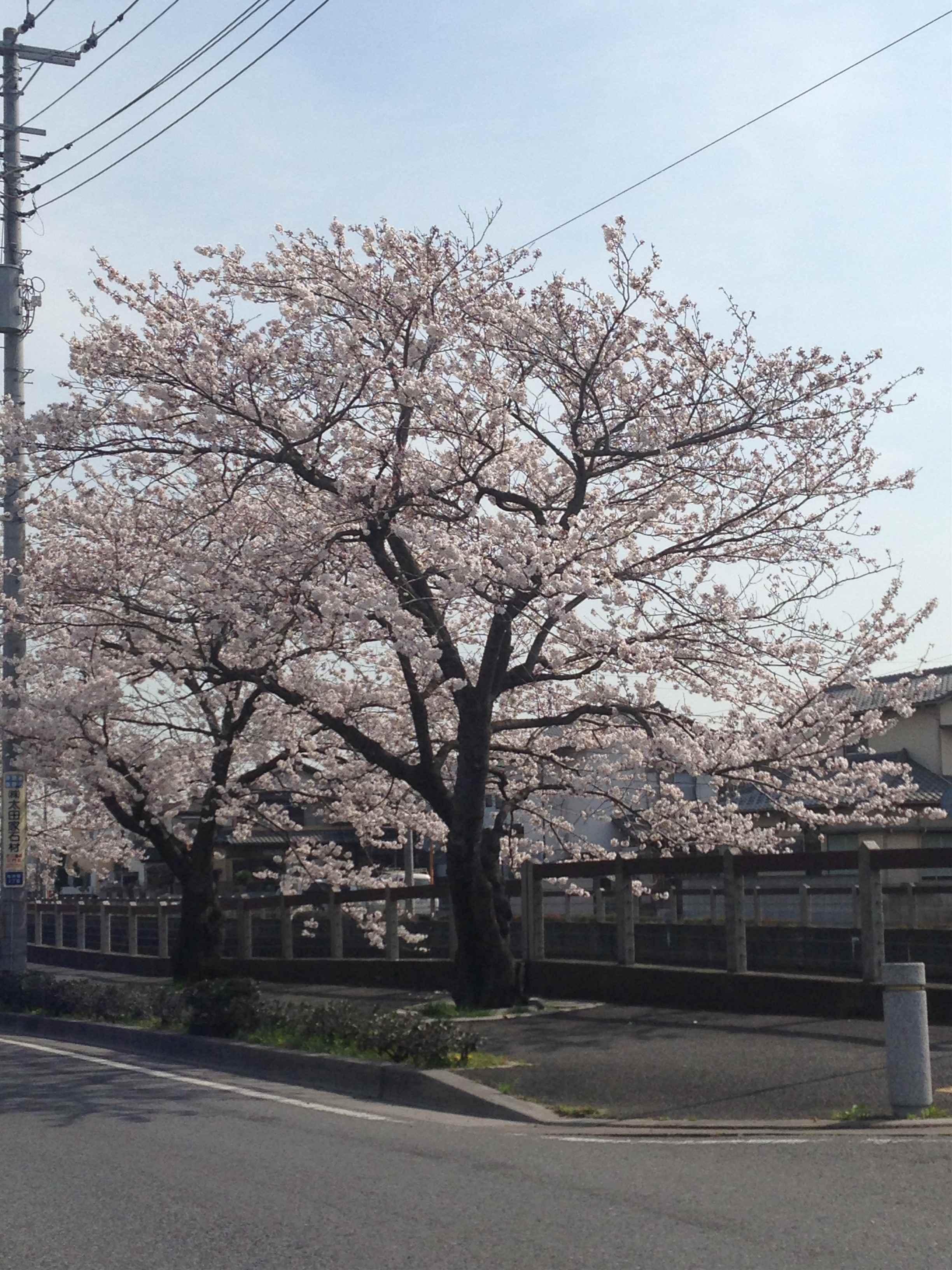 2014-04-02 09.24.48_R.jpg